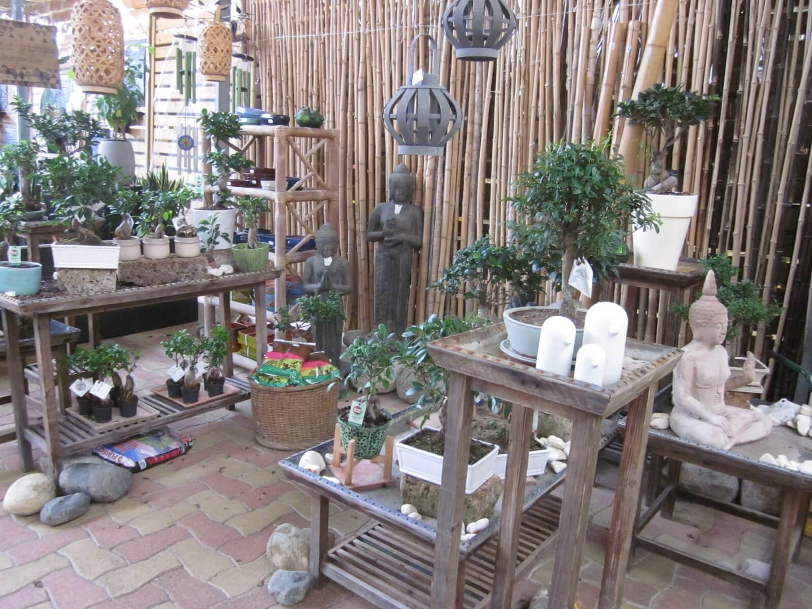 Plante D Intérieur Tendance des plantes d'intérieur pour une ambiance nature : vertes