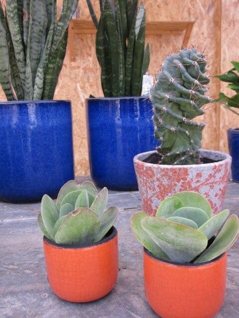 des plantes d 39 int rieur pour une ambiance nature vertes. Black Bedroom Furniture Sets. Home Design Ideas